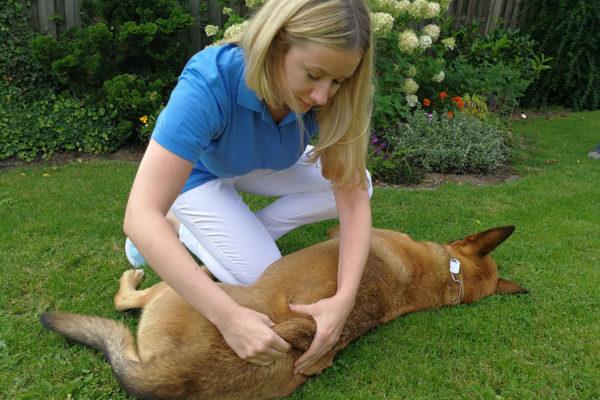 anna-niedermeyer-tierphysiotherapie2